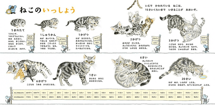 生まれたての猫から20歳の老猫までの変化を描いた「ねこのいっしょう」 by ねこのずかん