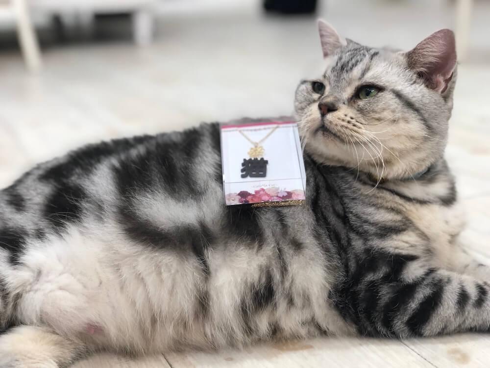 横たわる猫 by ゆめかわアニマルパーク