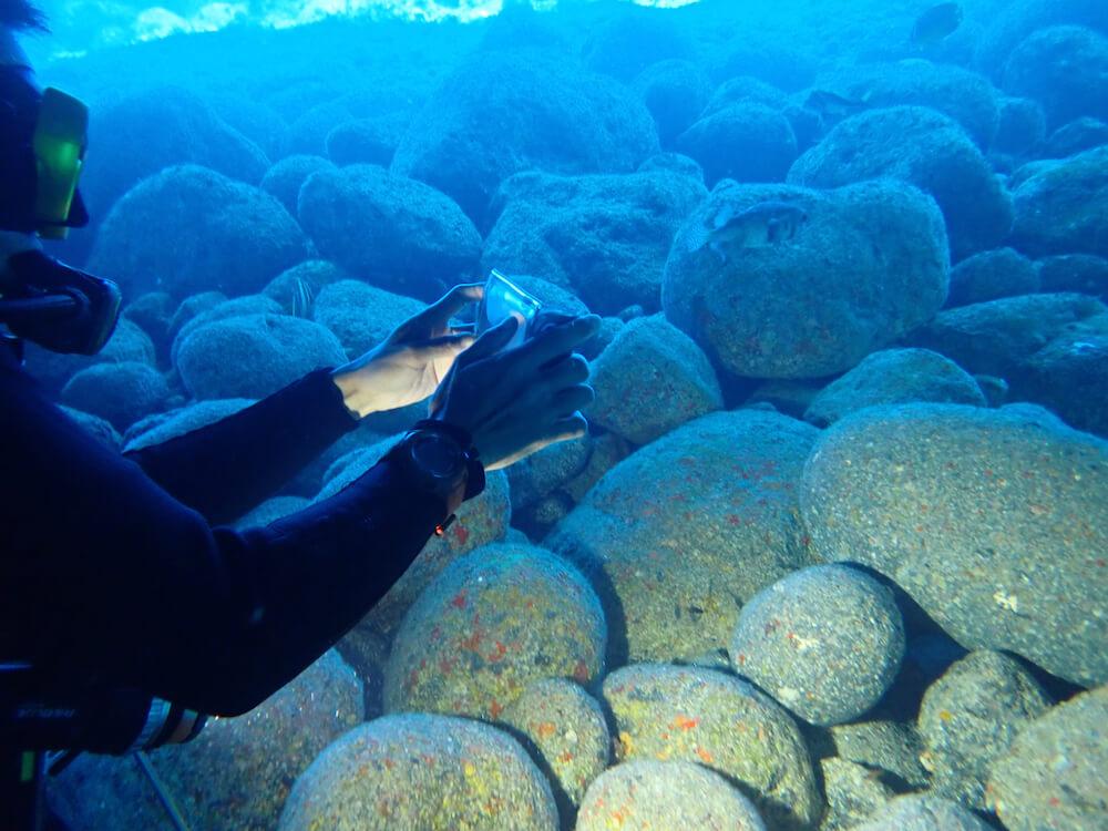 海中でダイビングをしながらLINNÉ LENS(リンネレンズ)で魚を識別している様子