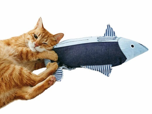デニムカツオを抱えてキックする猫