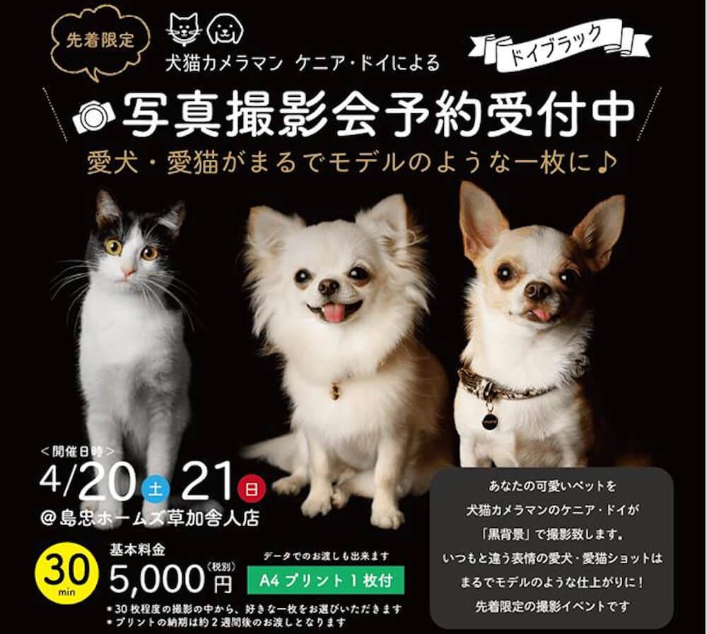 ケニア・ドイの「ドイブラック」犬猫撮影会