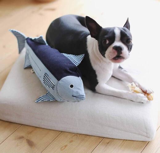 デニムカツオの横に座る犬