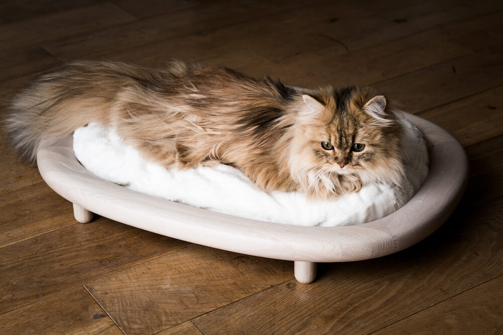 カリモクの猫ベッド「KARIMOKU CAT BED」でくつろぐ猫