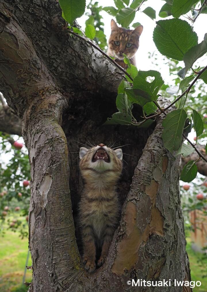 青森のリンゴ農園の猫 by 自由ネコ