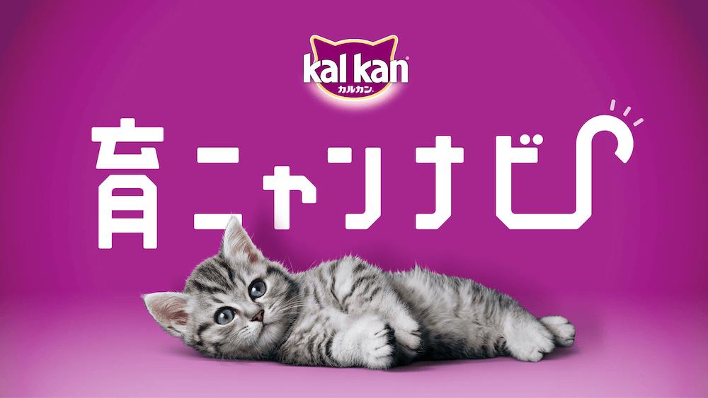 子猫の成長に合わせて生活管理を適切に導く Googleアシスタント対応アプリ「育ニャンナビ」