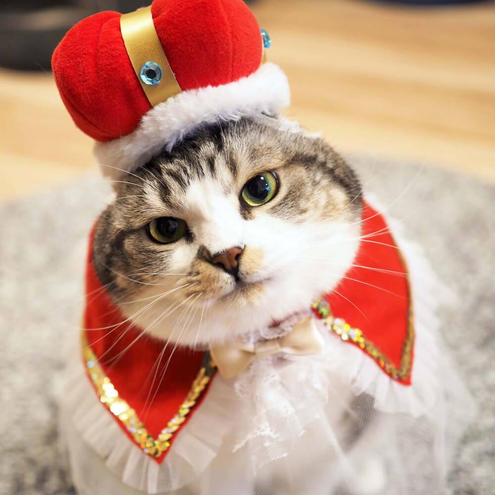 王様の衣装でコスプレした猫「じゃこ」の写真(@jako0317)