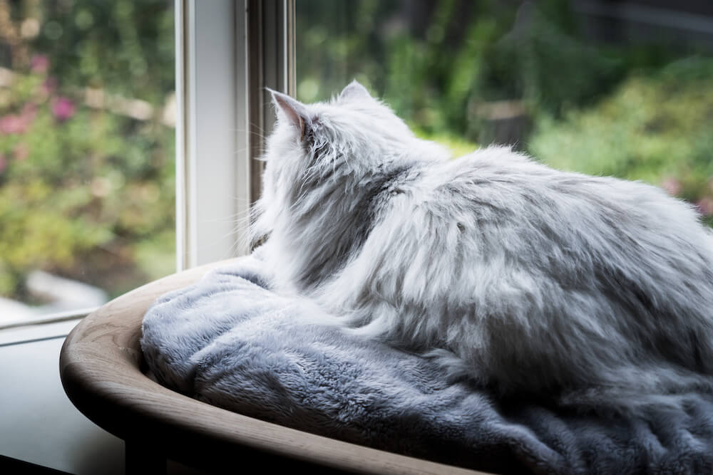 出窓に設置した「KARIMOKU CAT BED」に座って外を眺める猫