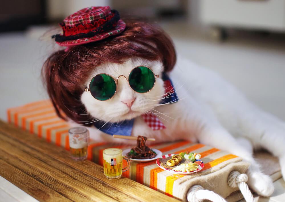 サングラスをして海外女優?にコスプレした猫のぷぷ by @tamapupu