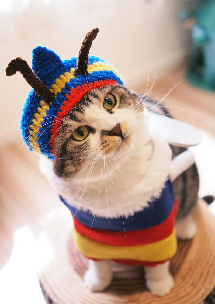 ニット帽を着用してコスプレした猫のじゃこ by@jako0317