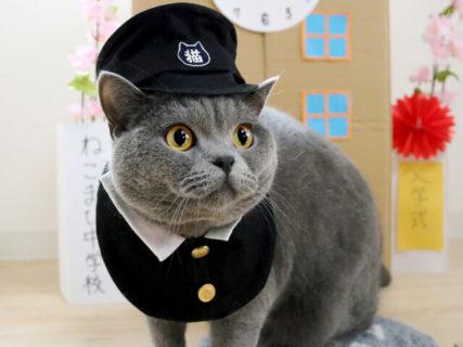 猫のコスプレ写真と猫グッズが大集合!「ねこにすと展7」が仙台三越で開催中