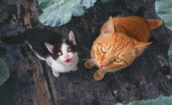 美しい風景とネコを大判写真で堪能できる、岩合光昭さんの新刊「自由ネコ」