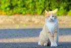 今年で7回目、仙台で猫イベント「かみすぎねこまつり」が6月2日に開催