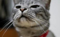 猫のオシッコ臭も洗濯機で落とせるニャ、ペット用の消臭洗濯洗剤「ランドリーきらら」
