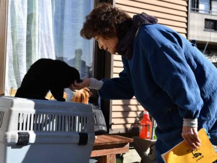 倍賞千恵子さんも黒猫にメロメロ♪ 映画「初恋〜お父さん、チビがいなくなりました」のメイキング映像を公開