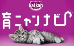 子猫の育て方を音声でサポート!カルカンがGoogleアシスタント対応アプリ「育ニャンナビ」を公開