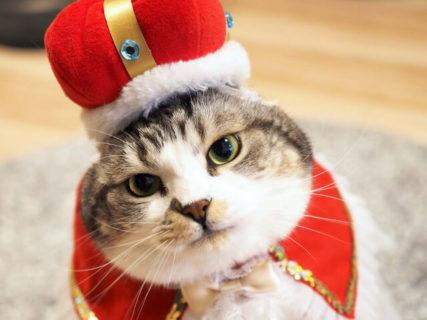 猫の写真600枚が有楽町マルイに大集合!東京に初上陸の「ねこにすと」5/18から開催