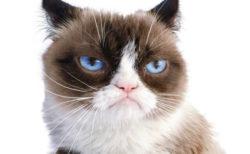 不機嫌そうな表情で人気の猫「グランピー・キャット」が死去、5/14に飼い主さんが公表