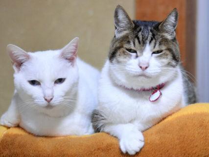 愛猫に日頃の感謝を伝えるニャ!飼い主さんのメッセージを送る「ラブレターコンテスト2019」