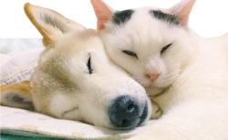 寄り添い合う姿が微笑ましい、認知症の犬と介護する猫の交流を描いたフォトブック「くぅとしの」