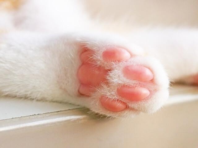 猫の肉球イメージ写真