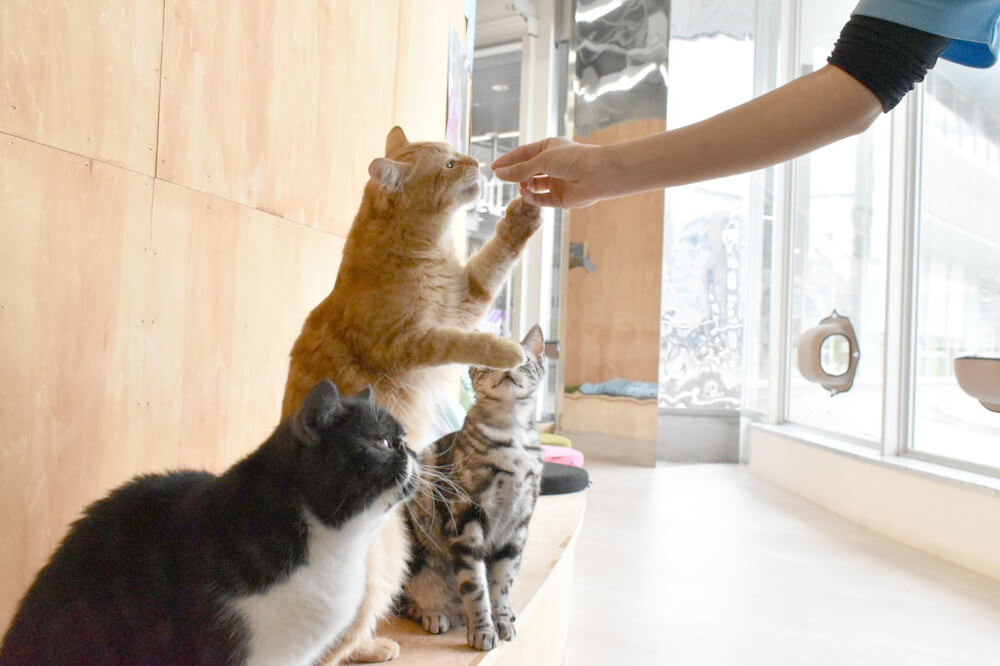 「Moff animal cafe」の猫の餌やり体験イメージ