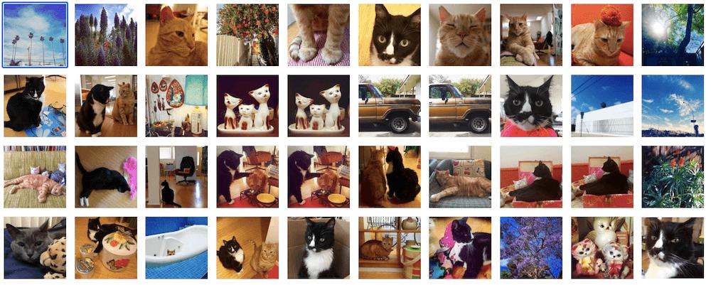 「ネコのいる暮らし展」で展示される猫の写真パネルイメージ