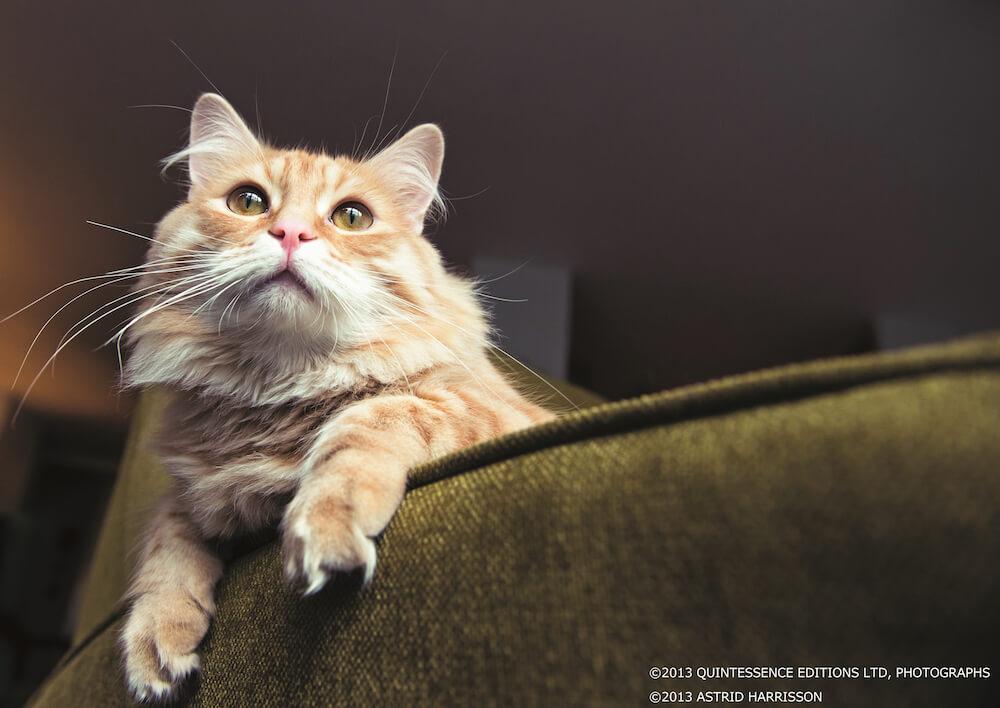 アストリッド・ハリソン(Astrid Harrisson)が撮影した猫の写真