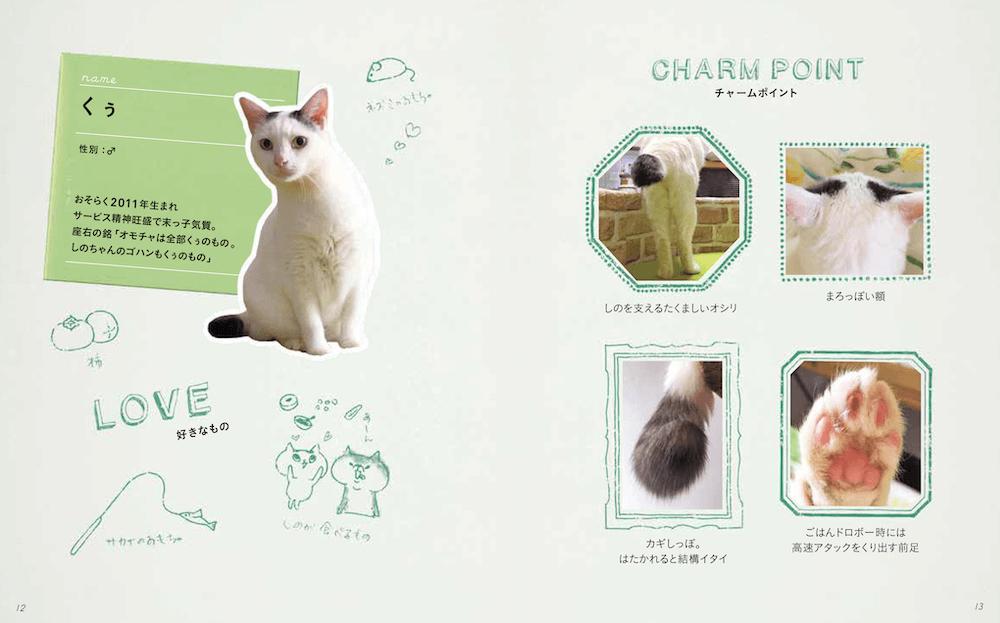 元野良猫の「くぅ」プロフィール