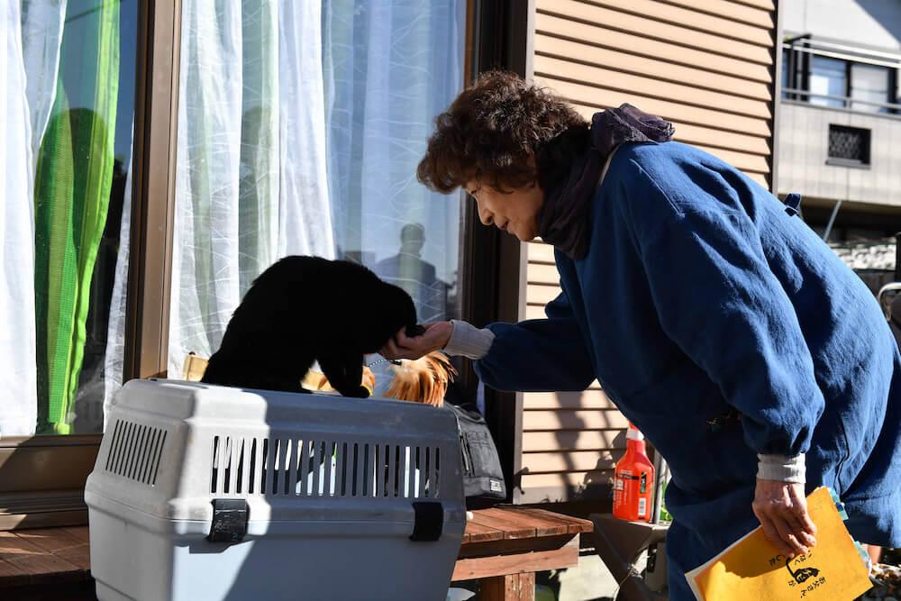 映画のクランクインで黒猫に挨拶する倍賞千恵子さん by映画「初恋〜お父さん、チビがいなくなりました」