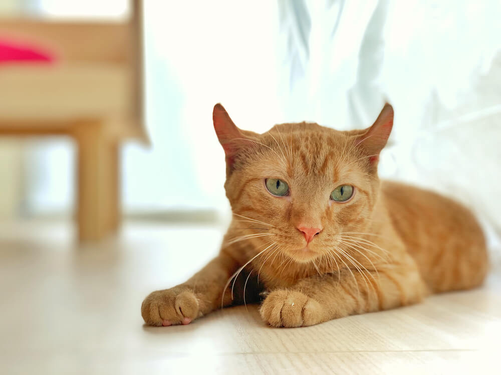 「Moff animal cafe」に在籍している猫スタッフ