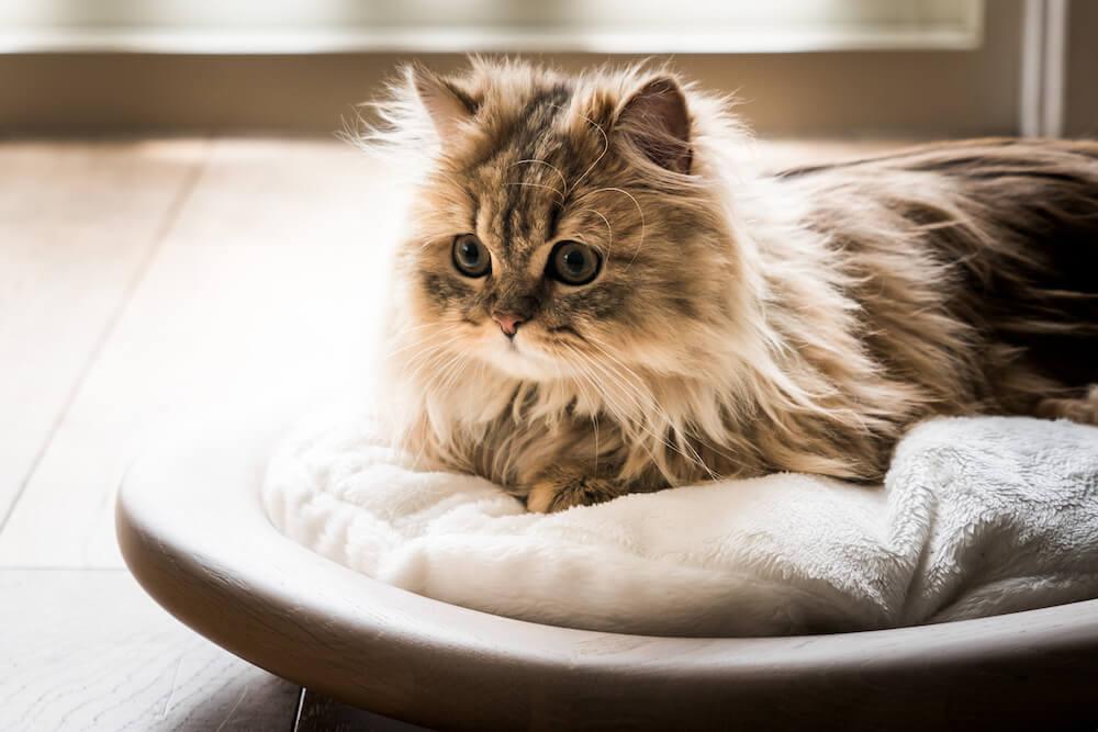 KARIMOKU CAT BED(ホワイト&シアーホワイト)の製品使用イメージ