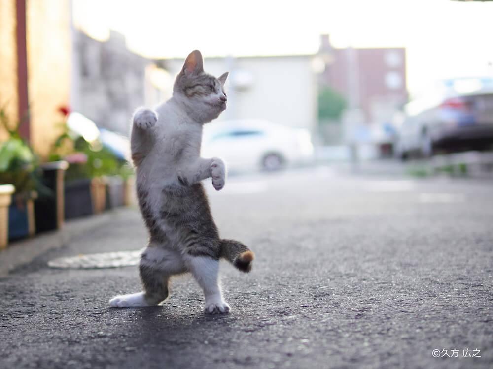 「のら猫拳」の写真家・久方広之さんが撮影した拳法立ちの猫
