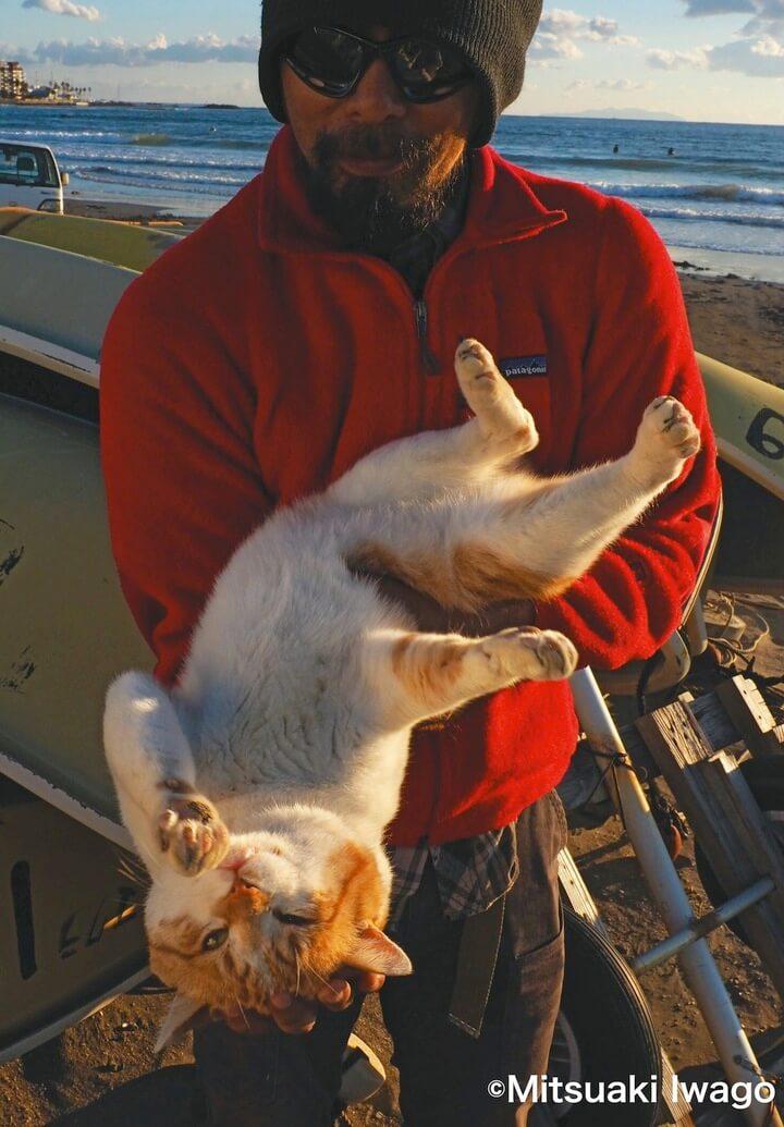 抱っこされる茶白猫の「キイロちゃん」by 自由ネコ