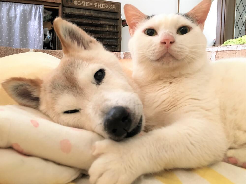 寄り添い合う犬の「しの」と猫の「くぅ」