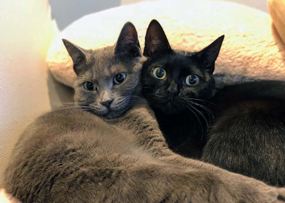 寄り添い合う仲良し猫「グレとバル」の写真(@gure.baru.mocota)