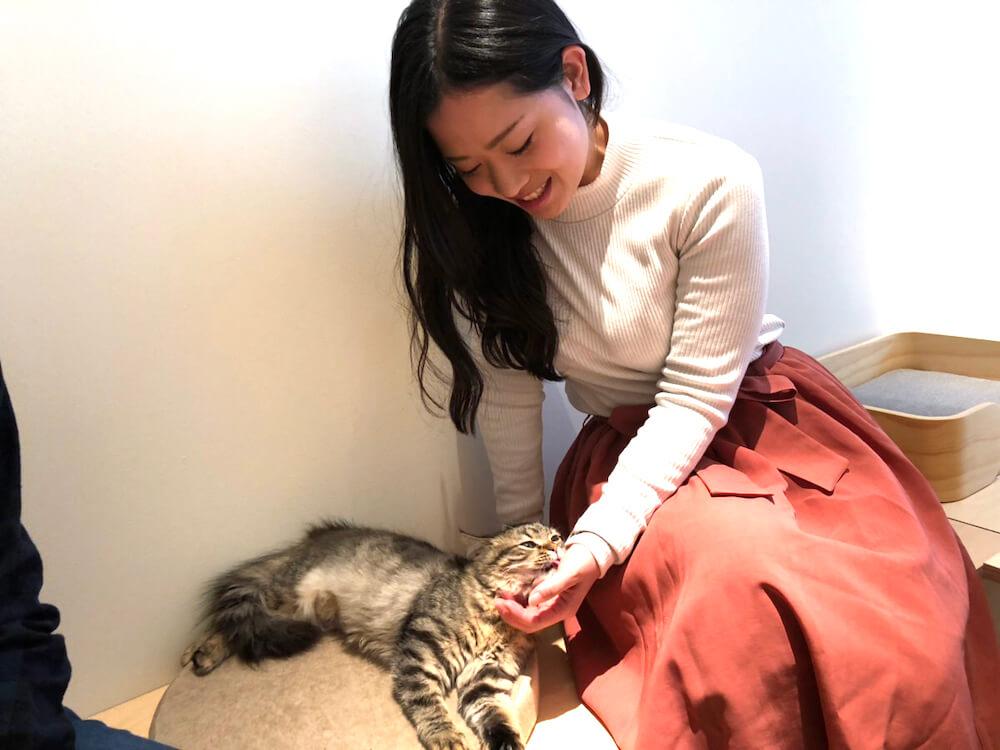 「Moff animal cafe」で猫と触れ合っている女性客