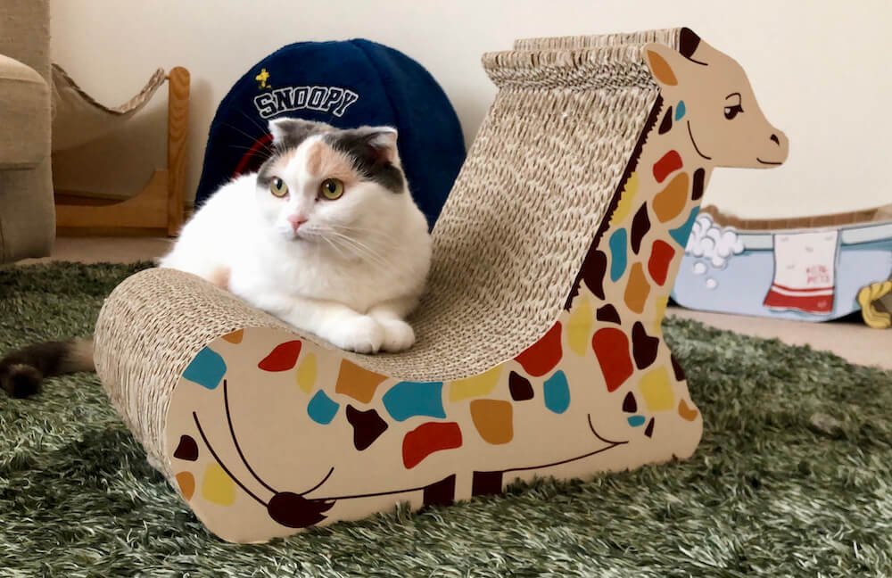 キリン型の爪とぎベッド(背面)に座る猫