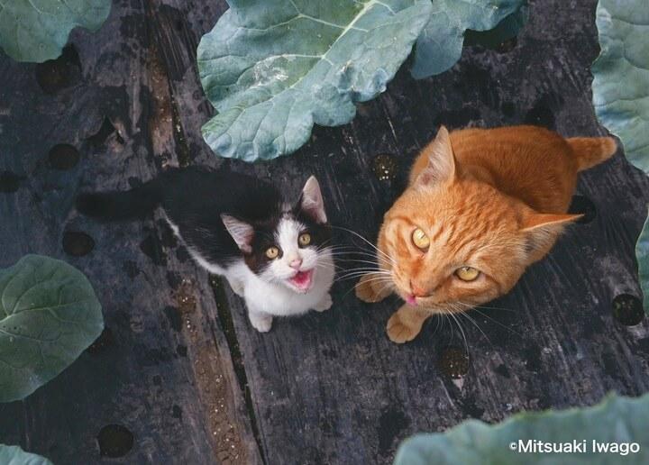 弘前市のビニールハウスで撮影された親子猫 by 自由ネコ