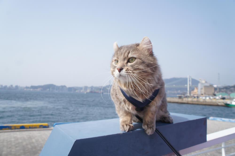 #猫すたぐらむフォトコンテストの最優秀作品「猫のひげと海の風」
