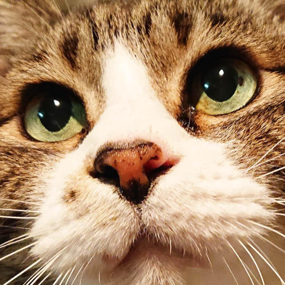 至近距離で撮影した猫「アムロ」の写真(@yonghwa.0622)