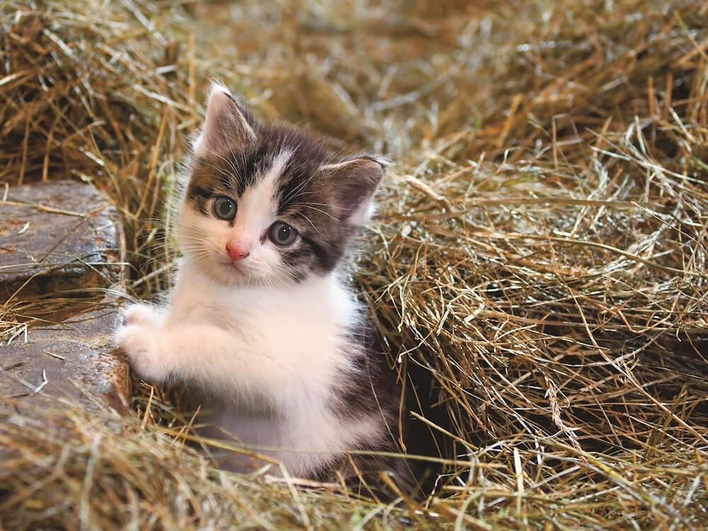 岩合光昭写真展「こねこ」で展示される猫写真イメージ(宮城県・田代島のこねこ)