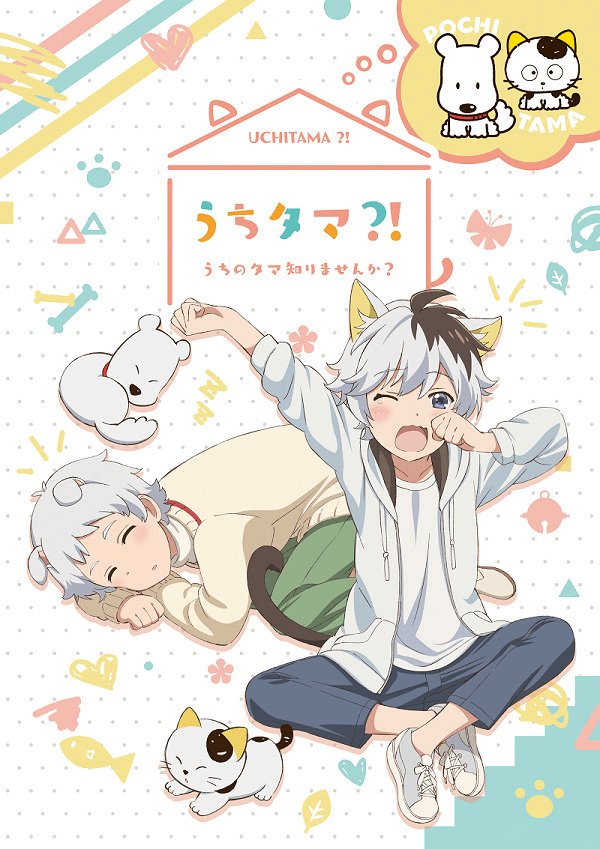 TVアニメ「うちタマ?! ~うちのタマ知りませんか?~」ティザービジュアル
