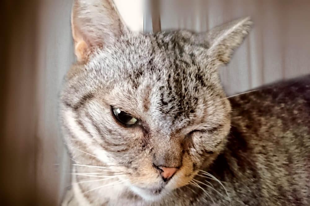 ウィンクをする猫のイメージ写真