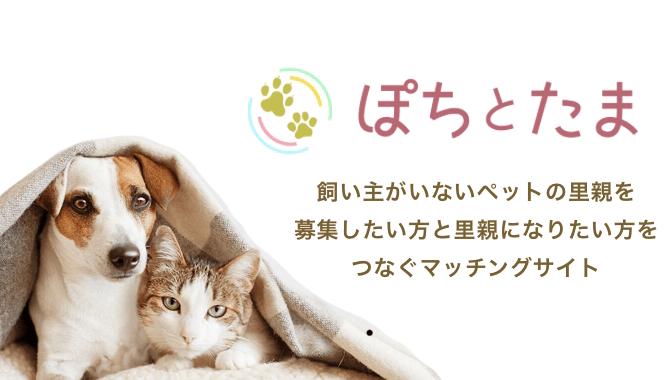 猫や犬の里親を募集できるWEBサービス「ぽちとたま」のロゴ