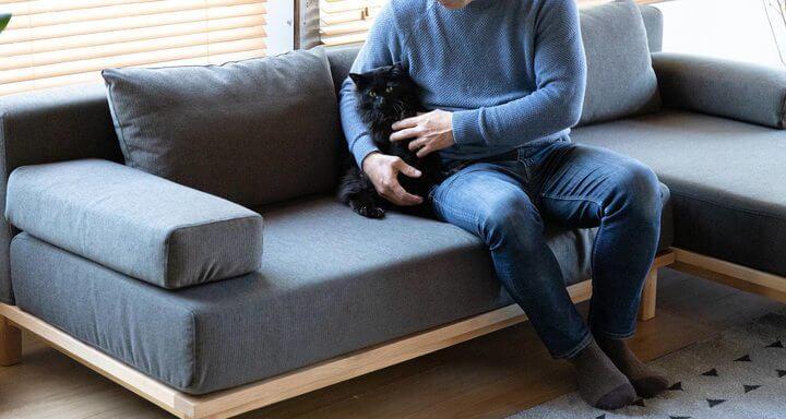家具ブランド「SIEVE」がプロデュースするペット家具「+pet(プラスペット)」シリーズのソファに座る猫