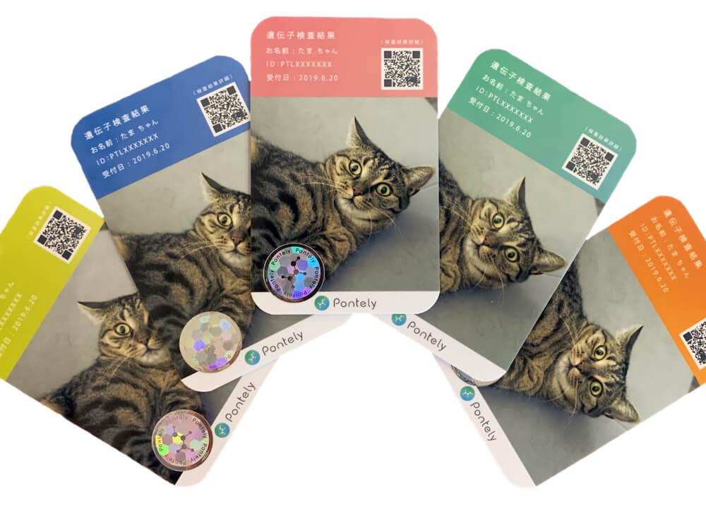 Pontely(ポンテリー)が提供する猫の遺伝子検査サービス