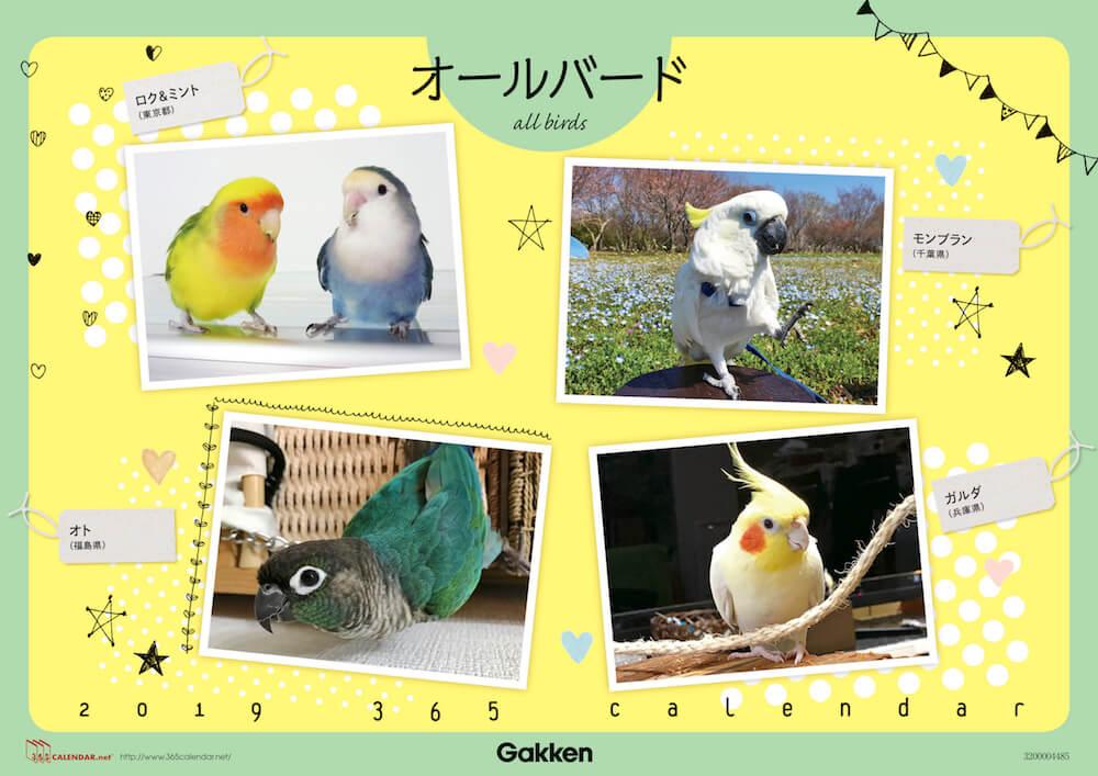 鳥の「365(サンロクゴ)カレンダー」表紙イメージ