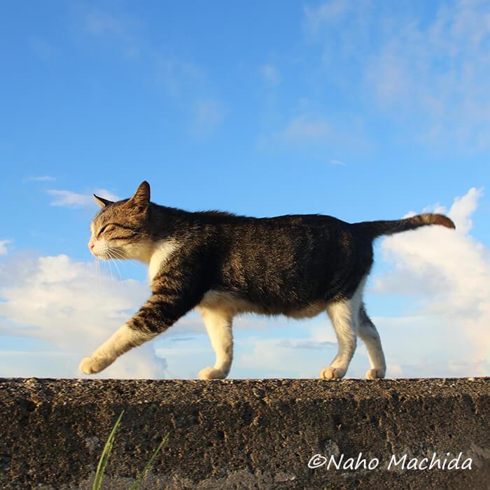塀の上を歩く猫 by Naho Machida