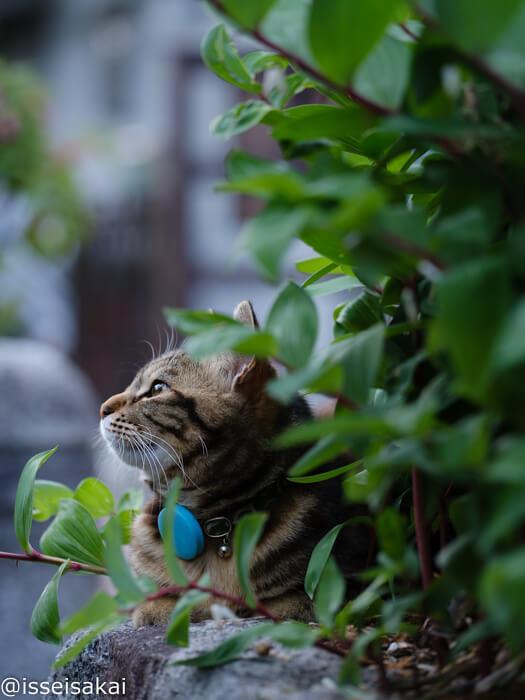 草木の陰から見える猫の横顔 by 阪井壱成