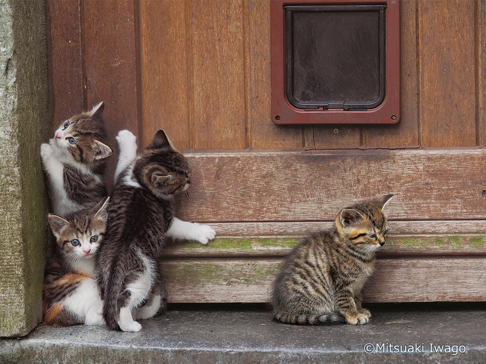 寄り添い合う子猫たちの写真 by 岩合光昭写真展&写真集「こねこ」